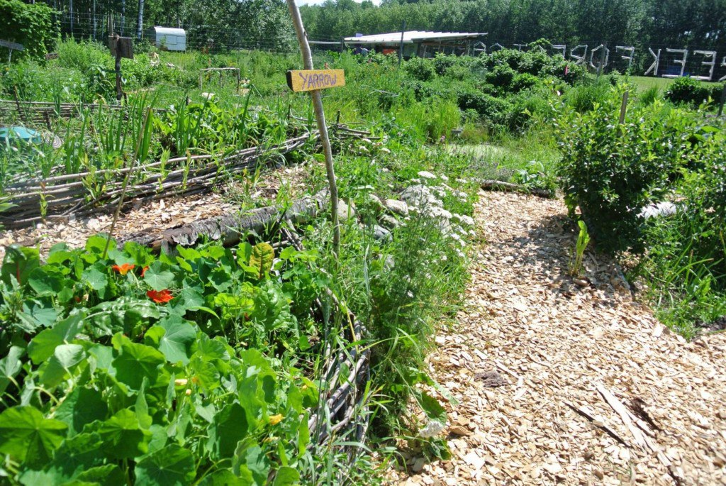 food forest, permaculture, northern climate gardening