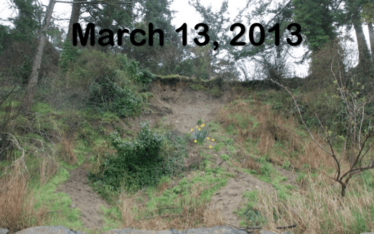 Before - An eroding coastal bank in 2013. Photo by Dave Polster.