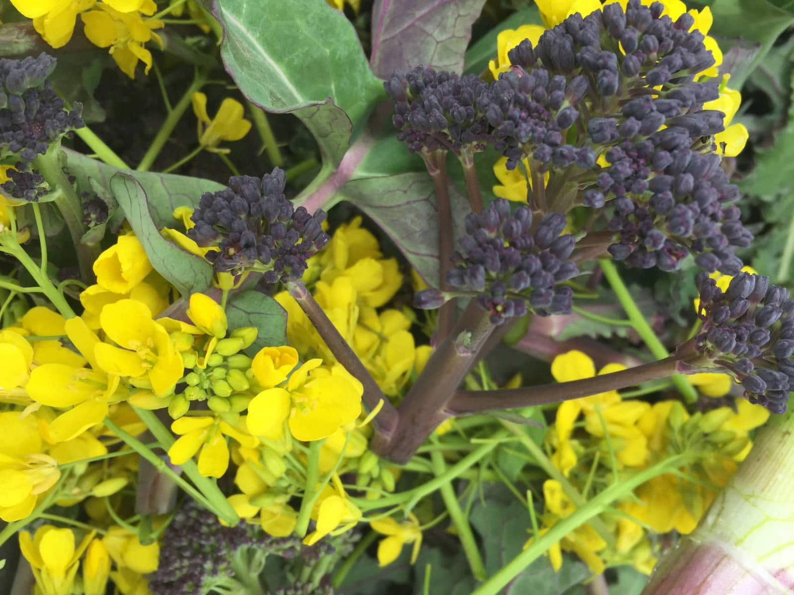 Edible flowers and late winter vegetables.