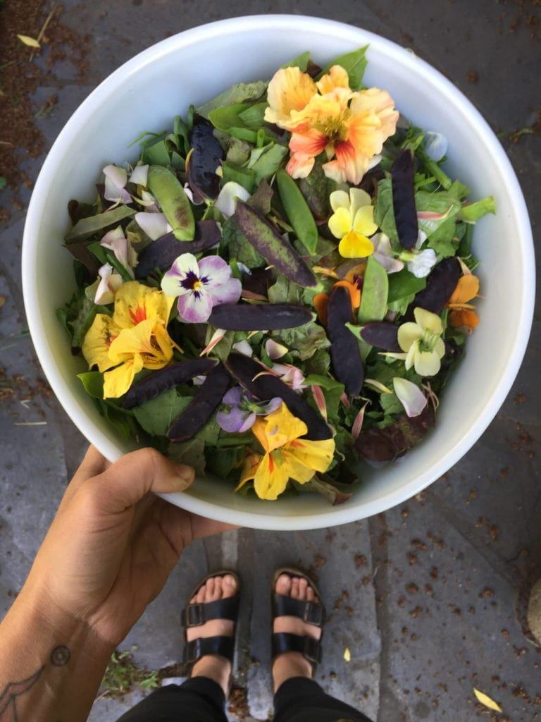 Dinner from our garden, purple peas and edile flowers.