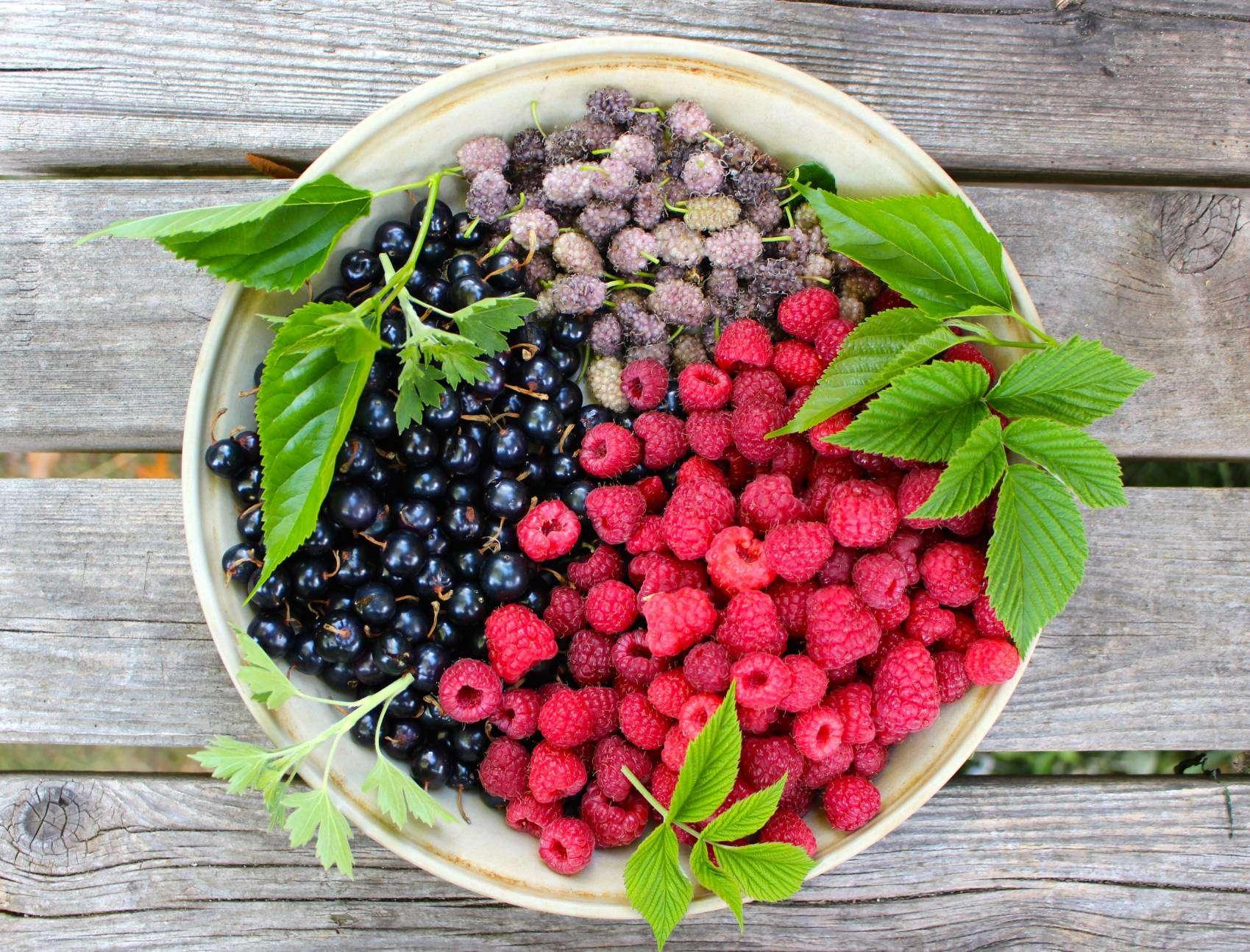 Forest garden bounty.