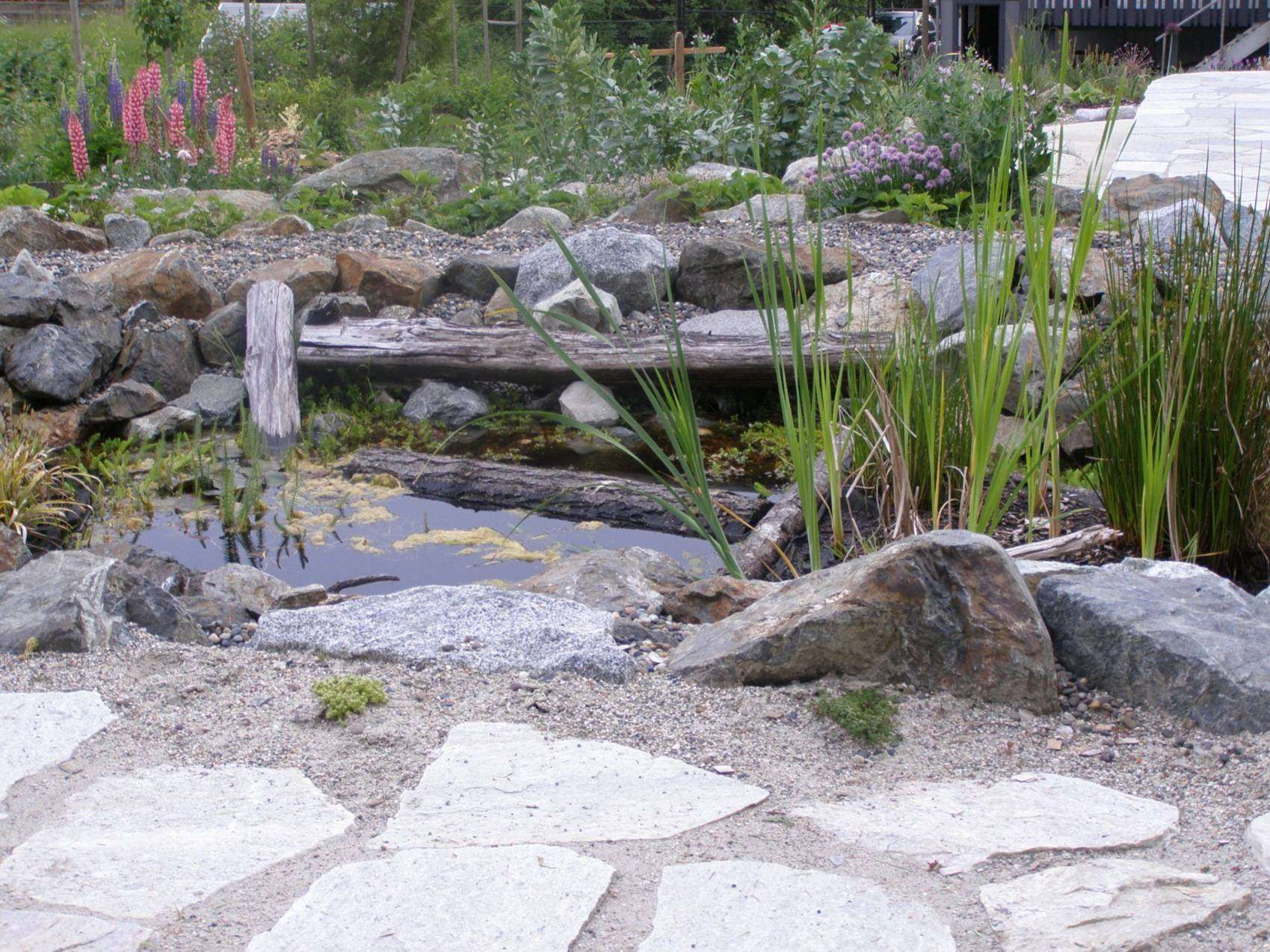 wildlife pond, edible landscape