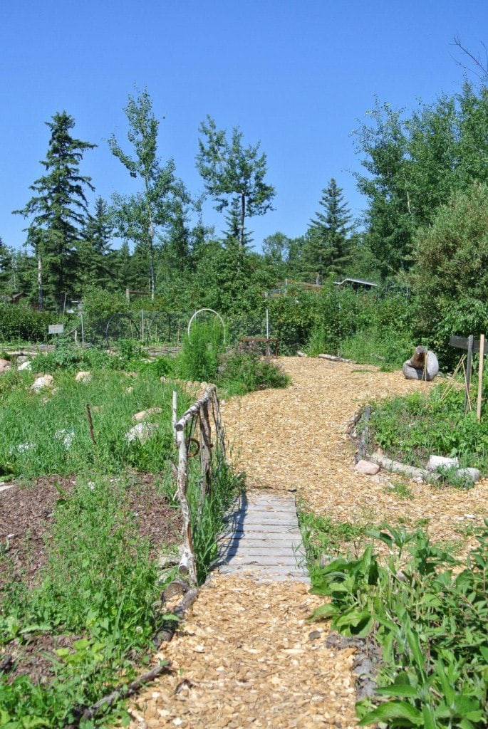 food forest, cold climate gardening