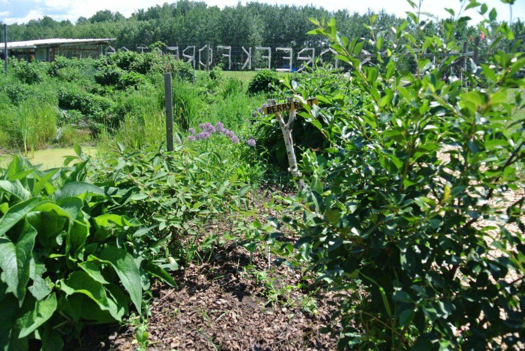 Ness Creek Forest Garden