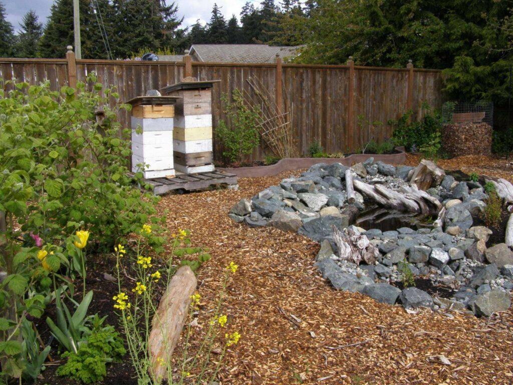 Bees enjoying the pond water