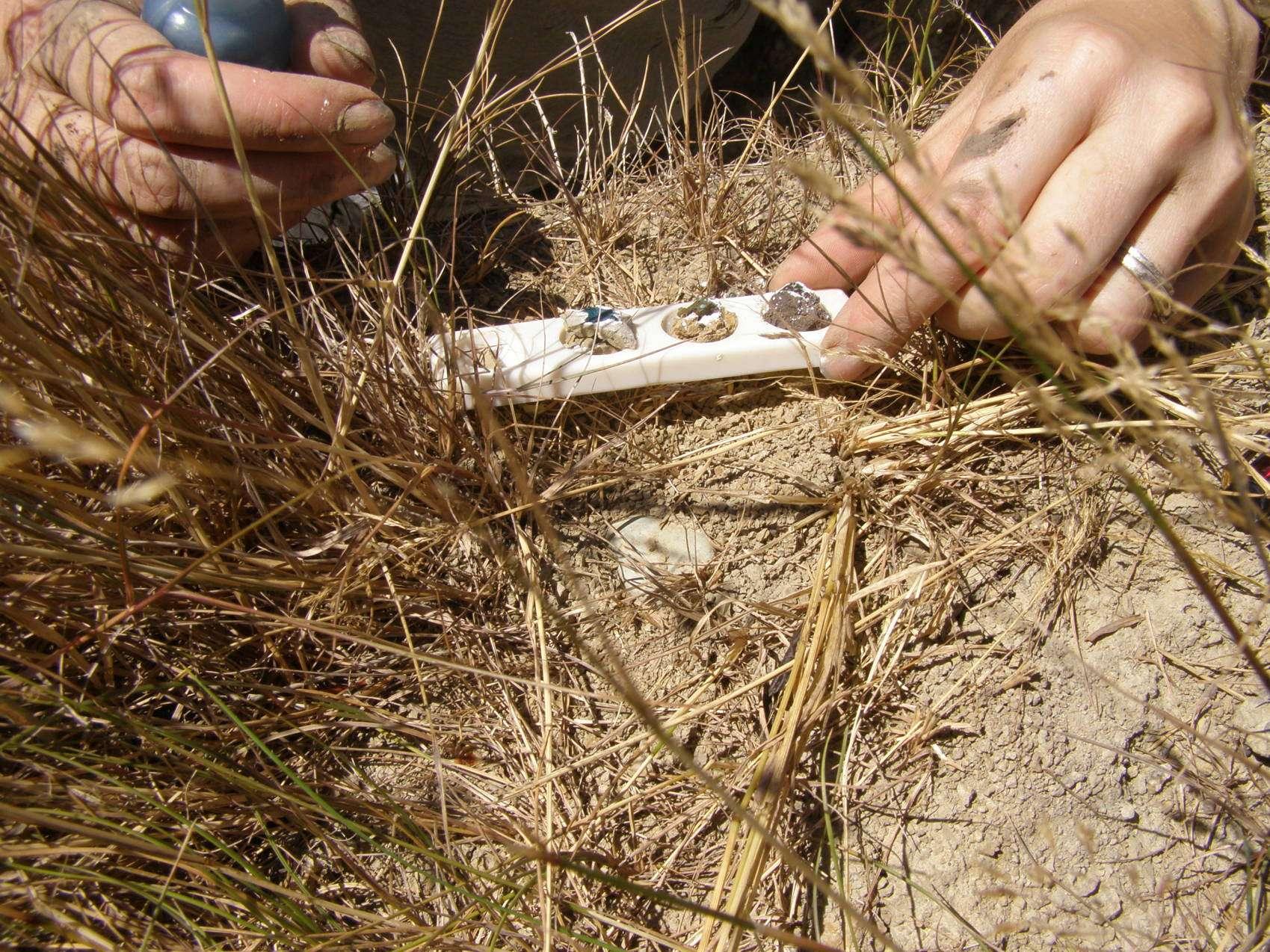 Measuring Soil Health