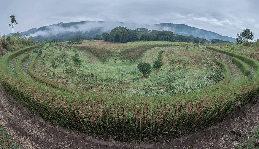 Rancho San Ricardo. A multi-strata keyline agro-forestry farm in Oaxaca State, Mexico.