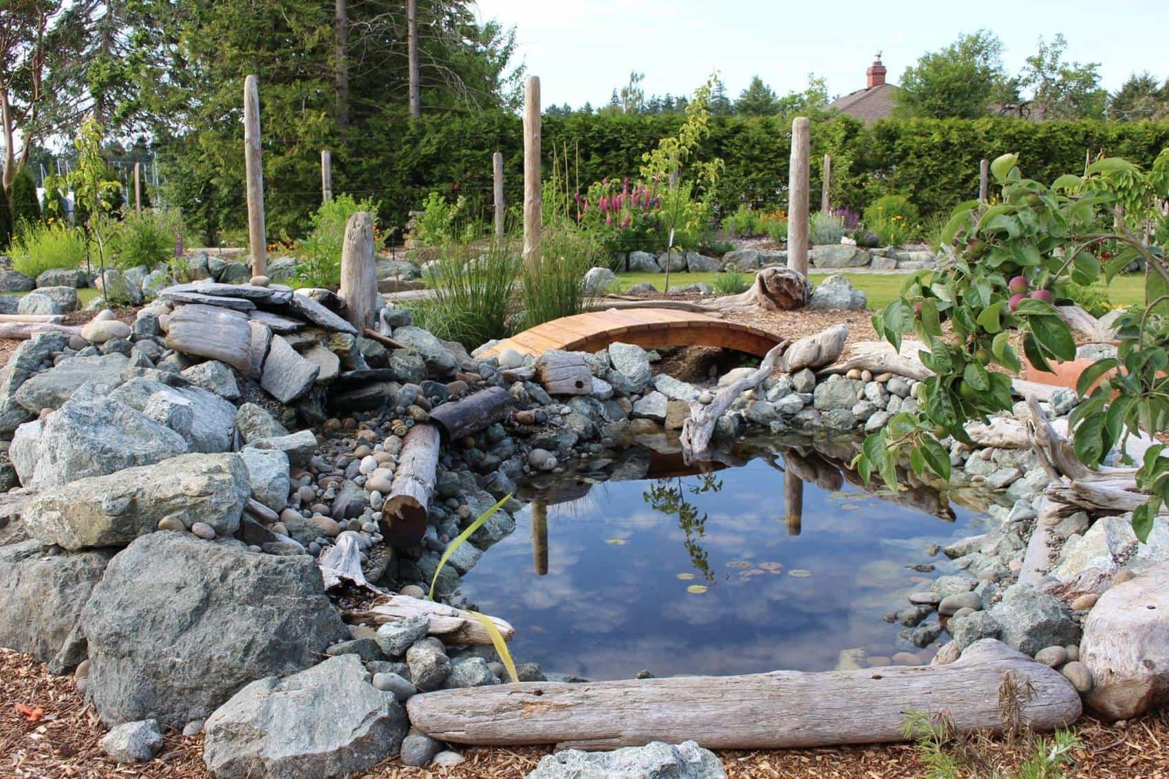 Wildlife pond!