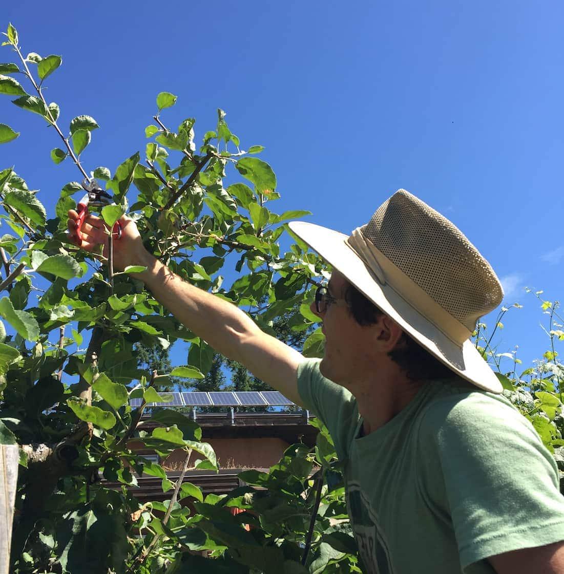 summer prune