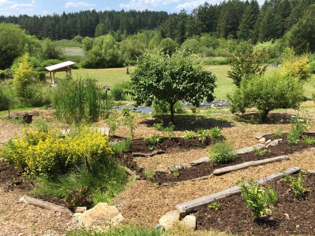 The permaculture demonstration garden at the Horticulture Centre of the Pacific
