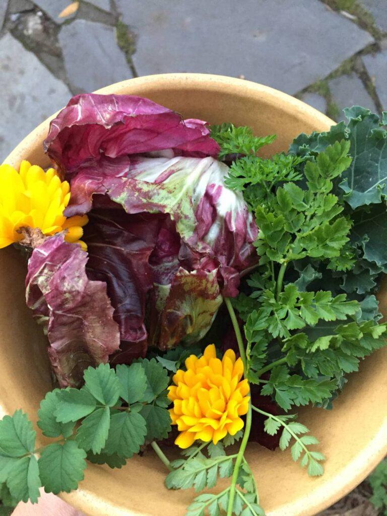 Radicchio, calendula and perennial veg