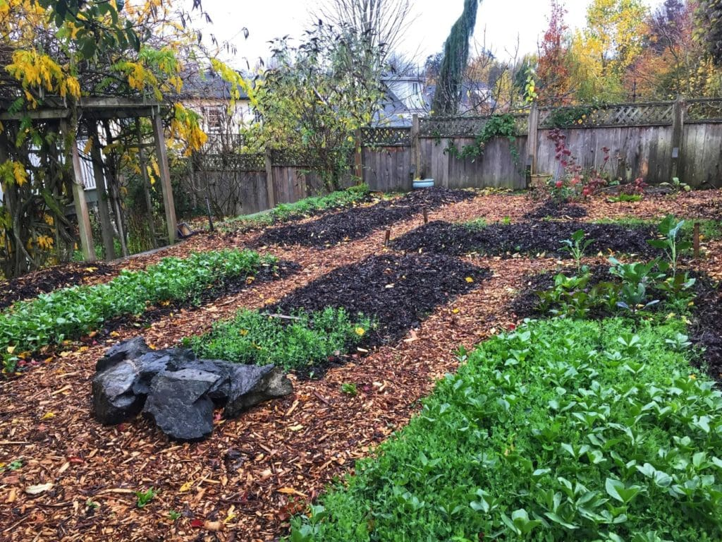 A friend of a friend contacted us about having us grow food in their backyard. With the help of our backyard gardening class we've transformed it into a micro-farm.