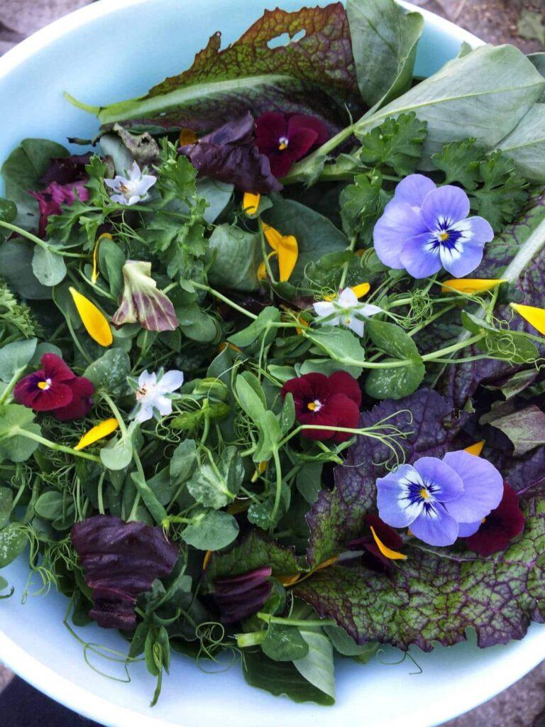 December salad harvest.