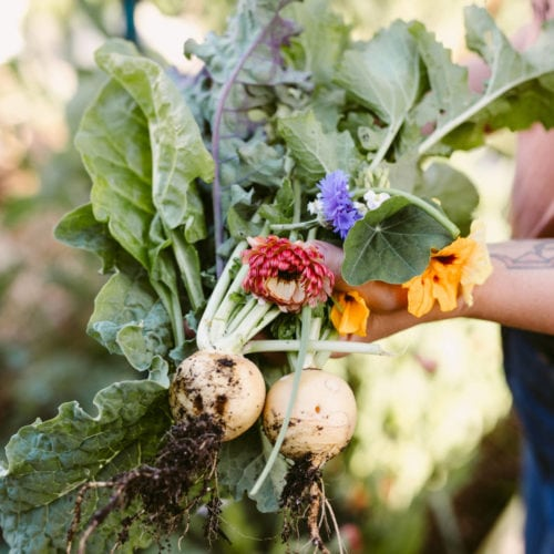 An edible garden give so much more variety than the grocery store. Photo: Kelly Brown